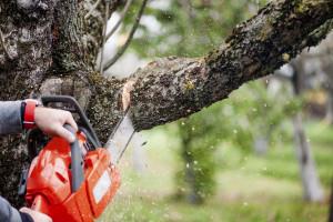 tree trimming rental home
