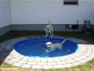 patio furniture dog baby pool