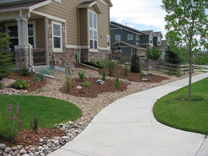 Low Maintenance Landscaping and Water Conservation xeriscape