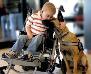 service dog service animals